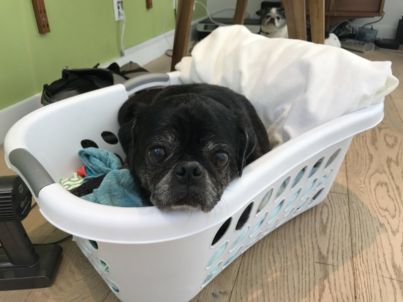 Don't forget to launder your pug