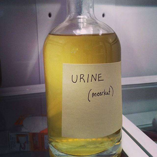 When bringing orangecello into the office, defensively label it before placing in the fridge.